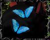 2 butterfly.