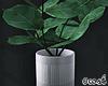 Minimalist House Plant