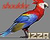 🦜 Parrot Queen