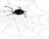 Spider/Web