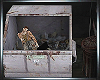 Ani Dumpster Dive Zombie