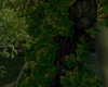 Forest Dryad