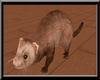~L~  Cute Baby Ferret