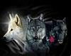 Love Wolves room