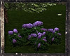 (PT) BEAR Wild Flowers 1