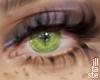 Halo Leaf. eyes