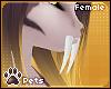 [Pets] Kaisila | teeth F