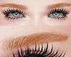 眉毛. Eyebrow Redhead.
