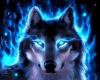 Blue Wolf Pic