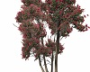Animated Birch Tree