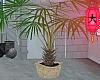 e huge palmtree