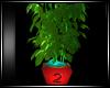 ! TALL PLANT MESH