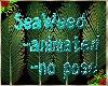 Sea Weed 3