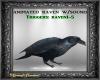 Anim Raven w/Sounds