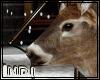 WhiteTail Deer Head Moun