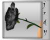 *J* black valentine rose
