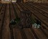 Witch Stump & Mushrooms