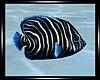 -S-Atlantica Fish 3