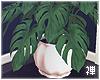 禅 | Tropical Planter