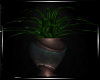 FX~CM Plant