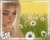♣ Daisy Field