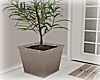[Luv] Plant 2