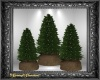 Christmas Forest Trees 3