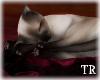 ~T~ Romance Cat