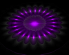 Poseless Purple Stage