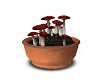 Witch's Mushrooms 2