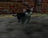 Smokie the Alley Cat