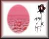 {Gx} Tahlulah Pink BG