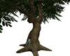 Tree Huggers Tree/ Poses