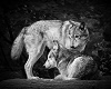 wolf and owl pic