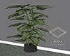 elle  Bedroom Plant