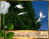I~White Doves
