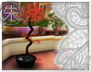 }T{  Red Maple Bonsai