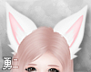 Y' White Fox Ears