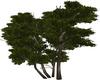 Moon Tree 2