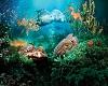 Ocean Life Bundle