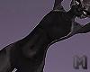 COAL Black Andro Furkini
