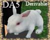 (A) Bunny Rabbit Pet