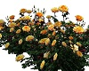 Yellow Roses Set of 10