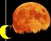 Harvest Moon Photoshoot