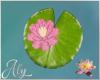 Water Lilies Single