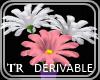 {TR} Derivable Daisy's