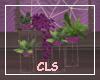 Plants Valentina