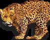 Beautiful Tiger Sticker