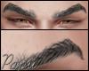 ♂ Paradigma Eyebrow
