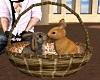 Bunnies in a Basket